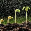 Software para gestão agropecuária